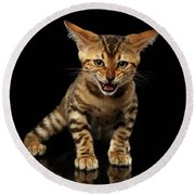 Bengal Kitty Stands And Hissing On Black Round Beach Towel by Sergey Taran