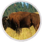 Bison Bull In The Late Evening Magic Light Round Beach Towel by Jerry Voss