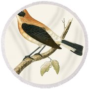 Black Eared Wheatear Round Beach Towel by English School