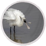 Black-faced Spoonbill Round Beach Towel by Martin Hale/FLPA