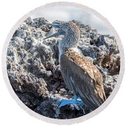 Blue Footed Booby Round Beach Towel by Jess Kraft