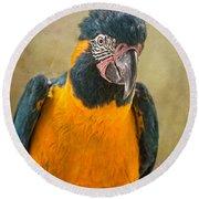 Blue Throated Macaw Portrait Round Beach Towel by Jamie Pham