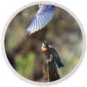 Bluebird Buzz Round Beach Towel by Mike Dawson
