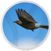 Bluebird Glide Round Beach Towel by Mike Dawson