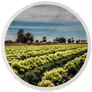Broccoli Seed Round Beach Towel by Robert Bales