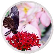 Black Butterfly On Red Flower Round Beach Towel by Sandy Taylor