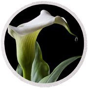 Calla Lily With Drip Round Beach Towel by Garry Gay