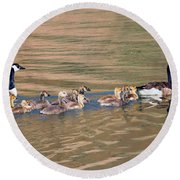 Canada Goose Family Round Beach Towel by Mike Dawson