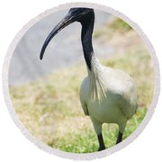 Carpark Ibis Round Beach Towel by Jorgo Photography - Wall Art Gallery