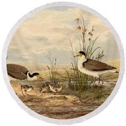 Cayley Masked Lapwing. Vanellus Miles Round Beach Towel by Neville Henry Penniston