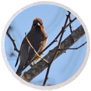 Cedar Wax Wing On The Lookout Round Beach Towel by Barbara Dalton