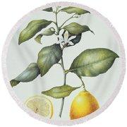 Citrus Lemon Round Beach Towel by Margaret Ann Eden