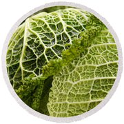 Close-up Of Savoy Cabbages Brassica Round Beach Towel by Panoramic Images