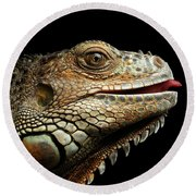 Close-upgreen Iguana Isolated On Black Background Round Beach Towel by Sergey Taran