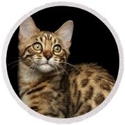 Closeup Bengal Kitty On Isolated Black Background Round Beach Towel by Sergey Taran