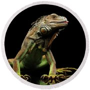 Closeup Green Iguana Isolated On Black Background Round Beach Towel by Sergey Taran