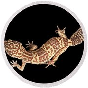 Closeup Leopard Gecko Eublepharis Macularius Isolated On Black Background Round Beach Towel by Sergey Taran
