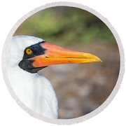 Closeup Of The Face Of A Nazca Booby Round Beach Towel by Jess Kraft