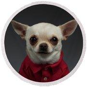 Closeup Portrait Chihuahua Dog In Stylish Clothes. Gray Background Round Beach Towel by Sergey Taran