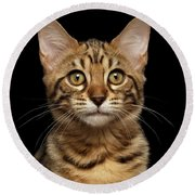 Closeup Portrait Of Bengal Kitty Isolated Black Background Round Beach Towel by Sergey Taran