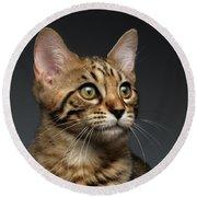 Closeup Portrait Of Bengal Male Kitty On Dark Background Round Beach Towel by Sergey Taran