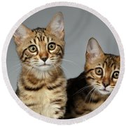 Closeup Portrait Of Two Bengal Kitten On White Background Round Beach Towel by Sergey Taran