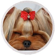 Closeup Yorkshire Terrier Dog With Closed Eyes Lying On White  Round Beach Towel by Sergey Taran