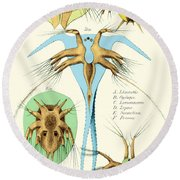 Copepods, Nauplius Larvae Round Beach Towel by Science Source