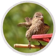 Crossbill Female At Feeder        Summer       Indiana Round Beach Towel by Rory Cubel