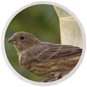 Crossbill Female Portrait      September    Indiana Round Beach Towel by Rory Cubel