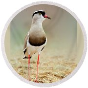 Crowned Lapwing Portrait Round Beach Towel by Etienne Outram