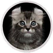 Cute American Curl Kitten With Twisted Ears Isolated Black Background Round Beach Towel by Sergey Taran
