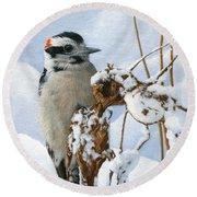 Downy Woodpecker  Round Beach Towel by Ken Everett