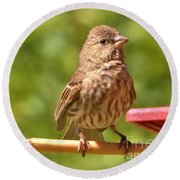 Female Crossbill At Feeder      Summer      Indiana Round Beach Towel by Rory Cubel