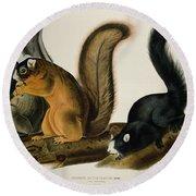 Fox Squirrel Round Beach Towel by John James Audubon