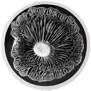 Fungi Two Round Beach Towel by Jim Occi