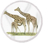Giraffe Family Round Beach Towel by Juan Bosco