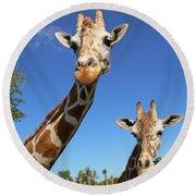 Giraffes Round Beach Towel by Steven Sparks