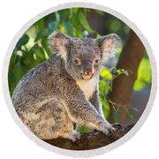 Good Morning Koala Round Beach Towel by Jamie Pham