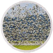 Goose Storm Round Beach Towel by Mike Dawson