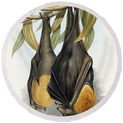 Grey Headed Flying Fox, Pteropus Poliocephalus Round Beach Towel by John Gould