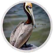 Grey Pelican Round Beach Towel by Inge Johnsson