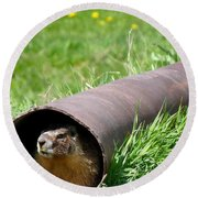 Groundhog In A Pipe Round Beach Towel by Will Borden