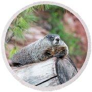 Groundhog On A Log Round Beach Towel by Jess Kraft