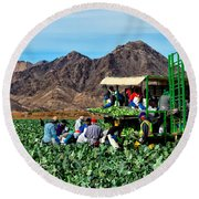 Harvesting Broccoli Round Beach Towel by Robert Bales