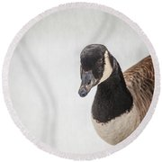 Hello There Round Beach Towel by Karol Livote