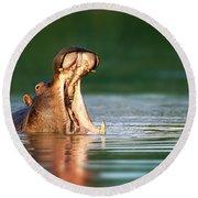 Hippopotamus Round Beach Towel by Johan Swanepoel
