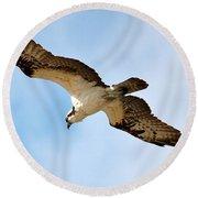 Hunter Osprey Round Beach Towel by Carol Groenen
