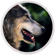 Hunting Wolf Round Beach Towel by Martin Newman