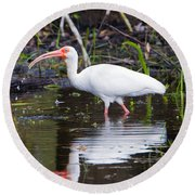 Ibis Drink Round Beach Towel by Mike Dawson